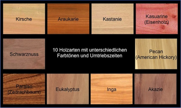 Holz Arten silvipastorile wertholzproduktion